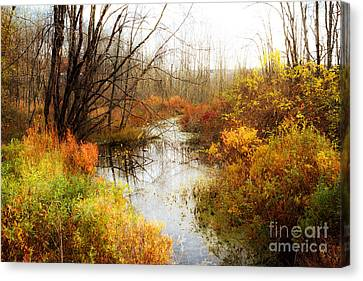 Fall Colors  Canvas Print by A New Focus Photography