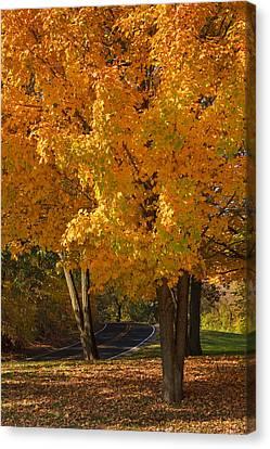 Fall Colors Canvas Print by Adam Romanowicz