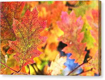 Canvas Print featuring the photograph Fall Colors by Arkady Kunysz