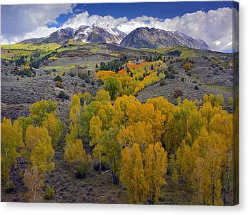 Fall Colors At Chair Mountain Colorado Canvas Print by Tim Fitzharris