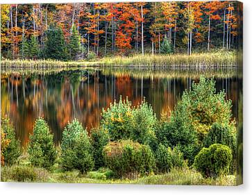 Fall Colors Canvas Print by David Simons