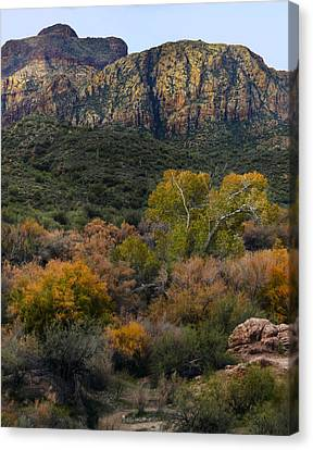 Fall Colors In The Desert Canvas Print by Dave Dilli