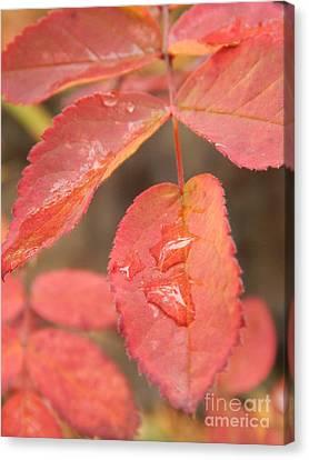 Fall Colors Canvas Print by Jennifer Kimberly