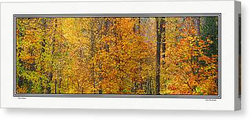 Fall Colors Canvas Print by John Bushnell