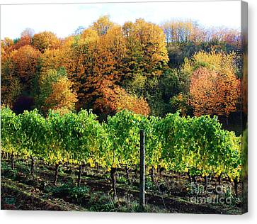 Fall Colors - Oregon Vineyard Canvas Print by Steven Baier