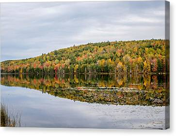 Fall Colors  Canvas Print by Trace Kittrell