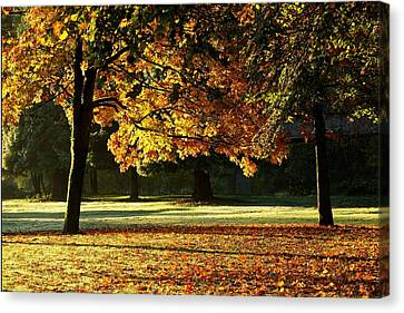 Fall Colours Canvas Print