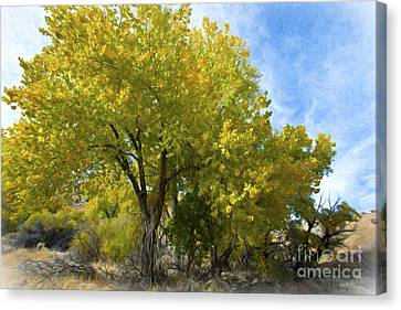 Fall Cottonwoods Canvas Print by Dianne Phelps