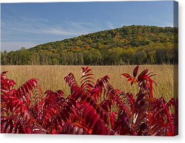 Fall Country Scene 6 Canvas Print