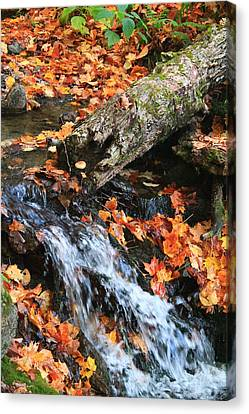 Canvas Print featuring the photograph Fall Creek by Alicia Knust