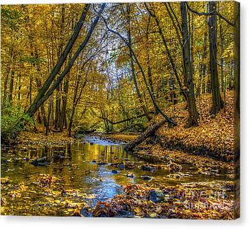 Fall Creek Canvas Print by Tim Buisman