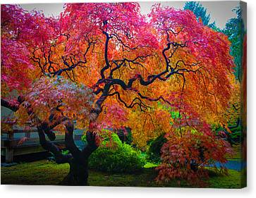 Fall Crowning Glory  Canvas Print by Patricia Babbitt