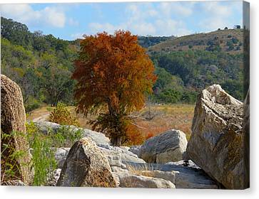 Canvas Print featuring the photograph Fall Cypress by David  Norman