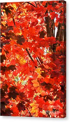 Canvas Print featuring the photograph Fall by David Perry Lawrence