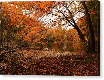 Fall Escape Canvas Print