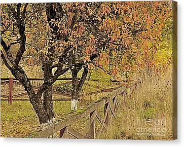 Fall Fenced Canvas Print by Tonia Noelle