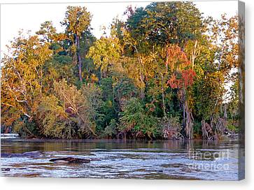 Fall Flow Canvas Print by Skip Willits