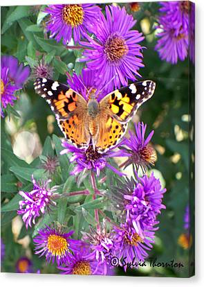 Canvas Print featuring the photograph Fall Flutterby by Sylvia Thornton