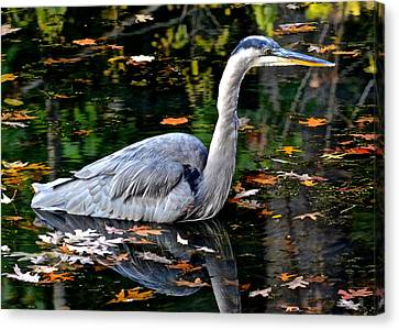 Fall Foliage And Fowl Canvas Print by Frozen in Time Fine Art Photography
