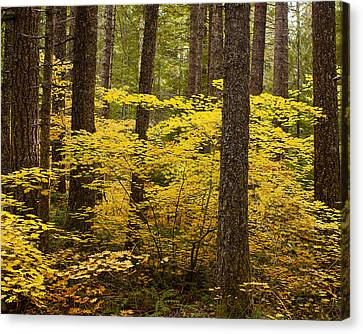 Canvas Print featuring the photograph Fall Foliage by Belinda Greb