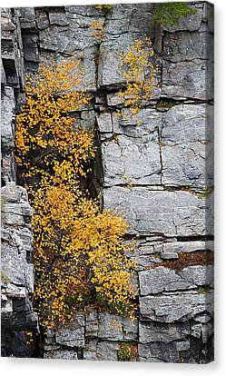 Canvas Print featuring the photograph Fall Foliage Colors 01 by Metro DC Photography