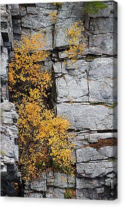 Fall Foliage Colors 01 Canvas Print