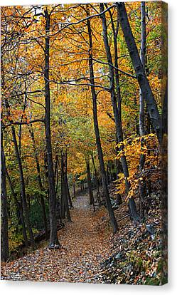 Canvas Print featuring the photograph Fall Foliage Colors 03 by Metro DC Photography