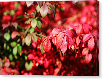 Canvas Print featuring the photograph Fall Foliage Colors 10 by Metro DC Photography
