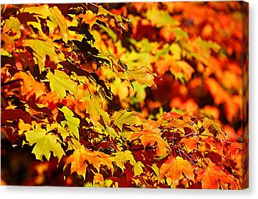 Canvas Print featuring the photograph Fall Foliage Colors 13 by Metro DC Photography