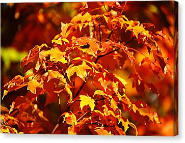 Canvas Print featuring the photograph Fall Foliage Colors 14 by Metro DC Photography