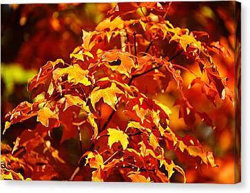 Fall Foliage Colors 14 Canvas Print