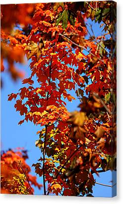 Canvas Print featuring the photograph Fall Foliage Colors 15 by Metro DC Photography