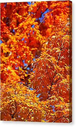 Canvas Print featuring the photograph Fall Foliage Colors 17 by Metro DC Photography