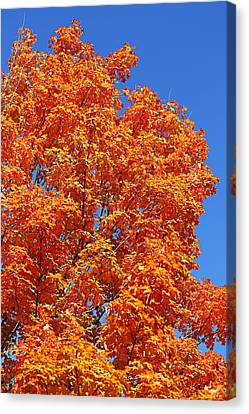 Canvas Print featuring the photograph Fall Foliage Colors 18 by Metro DC Photography