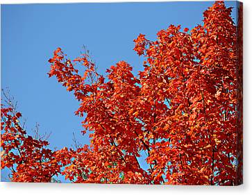 Canvas Print featuring the photograph Fall Foliage Colors 20 by Metro DC Photography