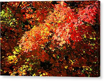 Canvas Print featuring the photograph Fall Foliage Colors 21 by Metro DC Photography