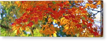 Fall Foliage, Guilford, Baltimore City Canvas Print by Panoramic Images