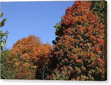 Fall Foliage In The Arboretum Canvas Print by Natural Focal Point Photography