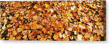 Fall Foliage In The Backyard, Eureka Canvas Print by Panoramic Images