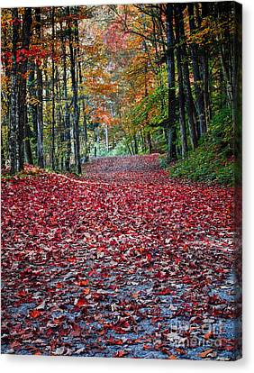 Fall Foliage In Thetford Vermont Canvas Print by Edward Fielding