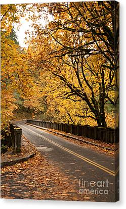 Fall Foliage On The Highway Canvas Print by Cari Gesch