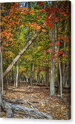 Fall Forest Canvas Print by David Cote