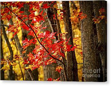 Fall Forest Detail Canvas Print by Elena Elisseeva
