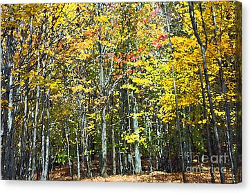Fall Forest Mm Canvas Print