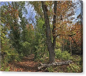 Fall Forest Trail Ozark-saint Francis Canvas Print by Tim Fitzharris