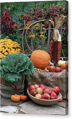 Fall Garden Display, Ornamental Kale Canvas Print by Richard and Susan Day