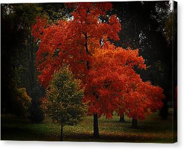 Fall Glory Canvas Print by Lena Wilhite