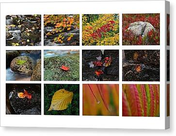 Fall Greetings Canvas Print by Juergen Roth
