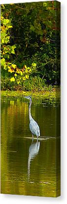 Fall Heron Canvas Print