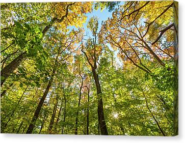 Amesbury Canvas Print - Fall In A Forest In Amesbury by Jerry and Marcy Monkman